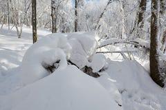 Śnieżna salopa zdjęcie stock