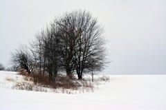 Śnieżna scena Zdjęcia Royalty Free
