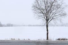 Śnieżna scena obraz royalty free