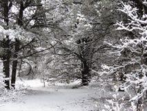 Śnieżna scena w drewnach zdjęcia stock