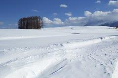 Śnieżna scena w Japonia Obraz Stock