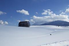 Śnieżna scena w Japonia Fotografia Stock