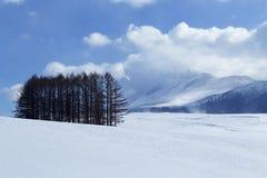 Śnieżna scena w Japonia Obrazy Royalty Free