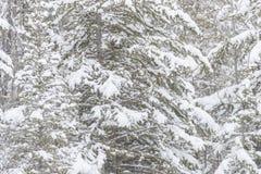 śnieżna sceny zima Obrazy Royalty Free