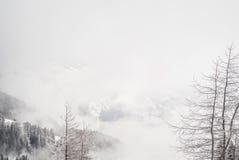 Śnieżna sosna Zdjęcia Royalty Free