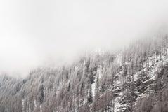 Śnieżna sosna Fotografia Royalty Free