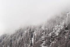 Śnieżna sosna Obraz Royalty Free