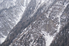 Śnieżna sosna Zdjęcia Stock