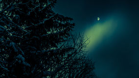 Śnieżna sosna na tle księżyc niebo Zdjęcie Royalty Free