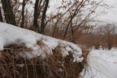 Śnieżna wioska Obraz Stock