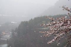 Śnieżna wiosny Czereśniowego okwitnięcia Shirakawago Drzewna góra Japonia Obraz Royalty Free