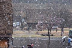 Śnieżna wiosny Czereśniowego okwitnięcia Shirakawago góry domu Drzewna architektura Japonia Zdjęcie Stock