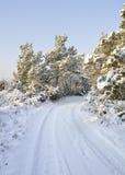 Śnieżna wsi droga, drzewa i fotografia royalty free