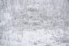 Śnieżna ziemia z bezlistnymi roślinami Obrazy Stock
