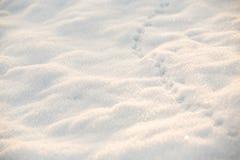 Śnieżna ziemia z zwierzęcymi śladami zdjęcie stock