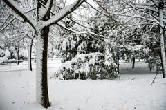 Śnieżna zima zdjęcia stock