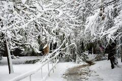 Śnieżna zima zdjęcie stock