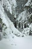 Śnieżna zima Obraz Royalty Free