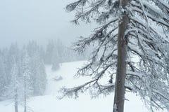 Śnieżna zima w halnym lesie Fotografia Royalty Free