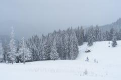 Śnieżna zima w halnym lesie Zdjęcia Royalty Free