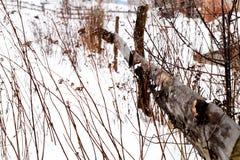 Śnieżna zimy scena z spada śniegiem od Karpackiego regionu, Ukraina, Europa obrazy royalty free