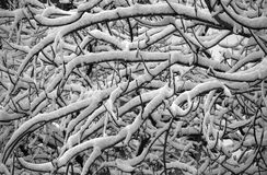 Śnieżne gałąź Zdjęcie Royalty Free
