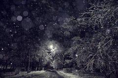 Śnieżne gałąź zdjęcia royalty free