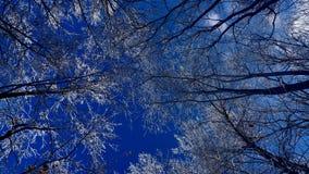 Śnieżne gałąź pod pięknym niebieskim niebem obraz stock