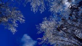 Śnieżne gałąź pod pięknym niebieskim niebem obrazy royalty free
