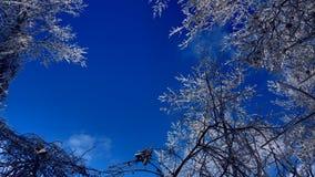 Śnieżne gałąź pod pięknym niebieskim niebem zdjęcie royalty free