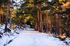Śnieżne pokrywy ślad w zimie zdjęcia royalty free