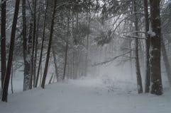 Śnieżne zawadiackość przez zima lasu zdjęcie royalty free