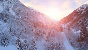 Śnieżnego zima krajobrazu zmierzchu półmroku drewien lasowi drzewa zbiory wideo