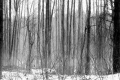 Śnieżnej zimy Mgłowi Mrozowi drzewa Fotografia Royalty Free