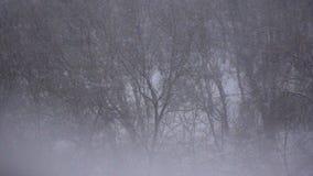 Śnieżnej zimy tła Lasowy zwolnione tempo zdjęcie wideo