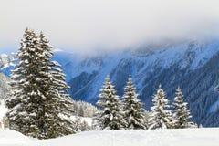Śnieżni świerkowi drzewa obrazy royalty free
