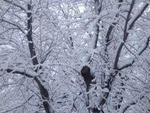 Śnieżni biali drzewa! Fotografia Stock