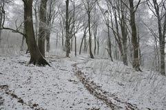 śnieżni buków drzewa Zdjęcie Stock