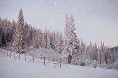 Śnieżni drewna zdjęcie stock