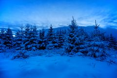 Śnieżni drewna w Winterime Obrazy Stock