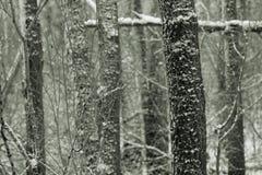 śnieżni drzew leśnych obraz royalty free