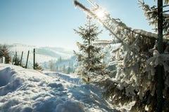 Śnieżni drzewa Zdjęcia Stock