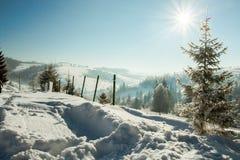 Śnieżni drzewa Obrazy Stock