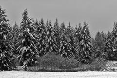 śnieżni drzewa Zdjęcia Royalty Free