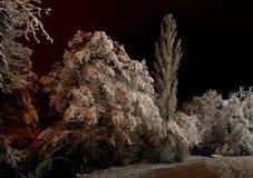 śnieżni drzewa Obrazy Royalty Free