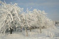 Śnieżni drzewa Fotografia Stock