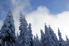 Śnieżni drzewa! obrazy royalty free