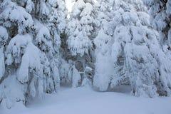 Śnieżni drzewa! zdjęcia royalty free