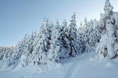 Śnieżni drzewa! obraz royalty free