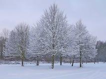 Śnieżni drzewa Zdjęcie Stock
